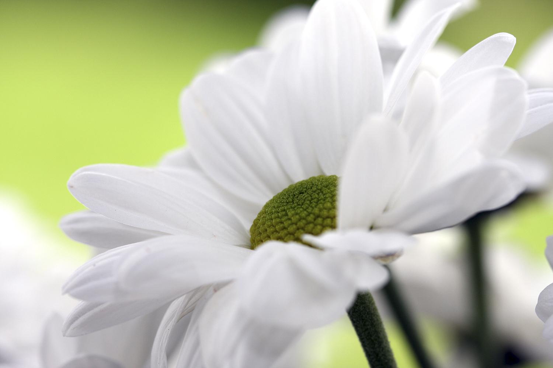 Voeux une carte voeux une carte boutique en ligne for Vente des fleurs en ligne