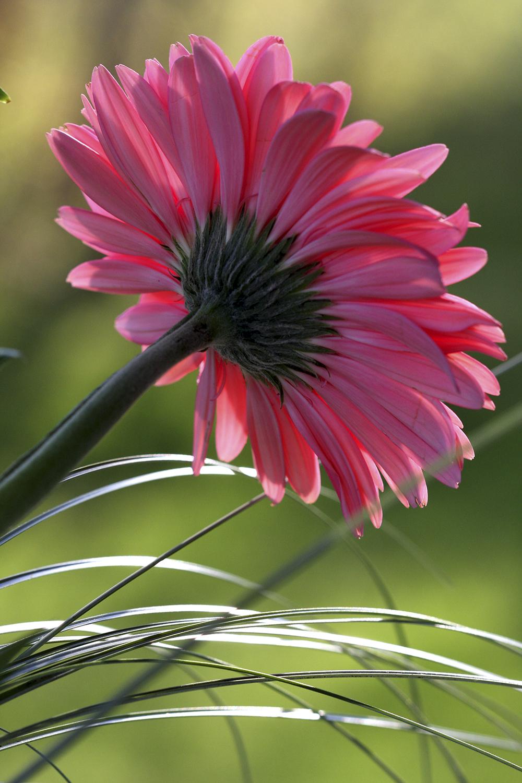 Voeux une carte voeux une carte boutique en ligne for Commandes fleurs