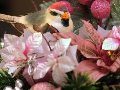 oiseau de noel