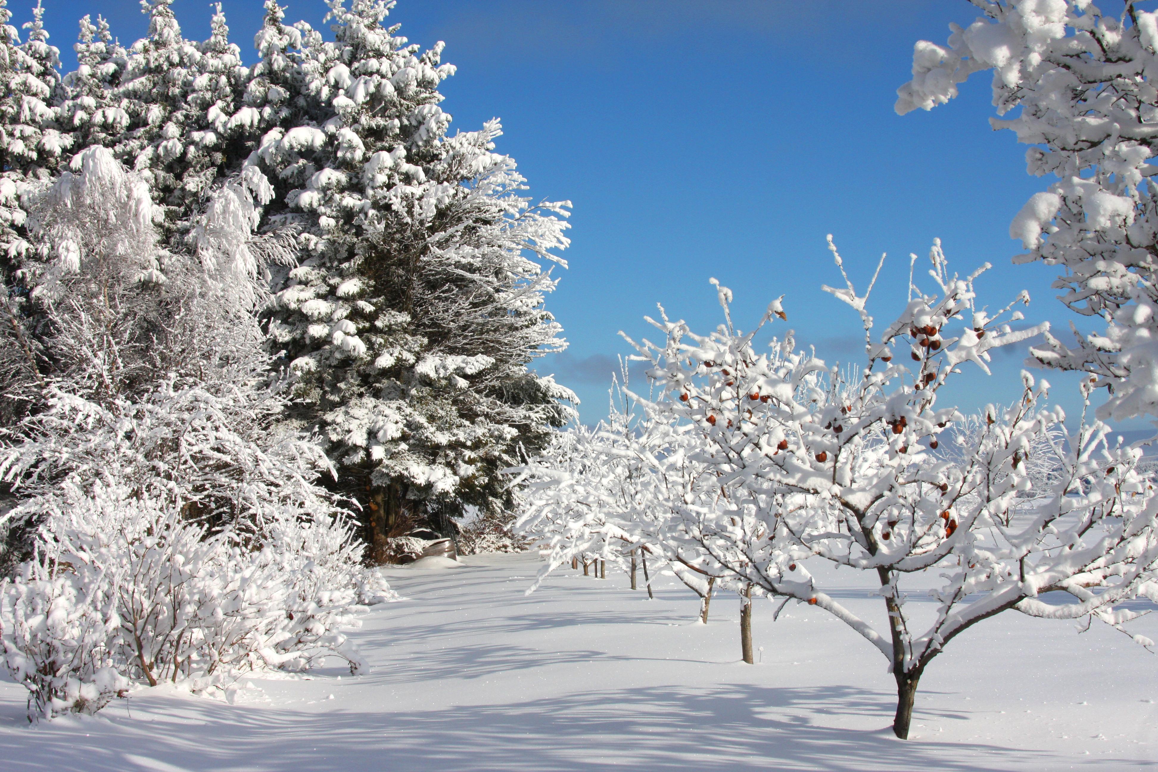 Paysage hiver fashion designs for Paysage design