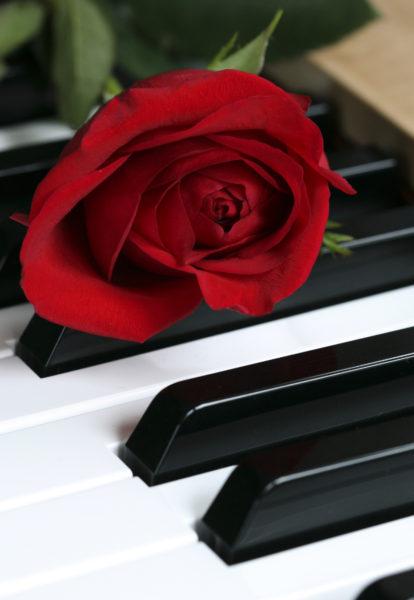 piano-rose