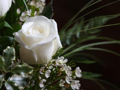 Rose Blanche Voeux une carte Rose Blanche Voeux une carte