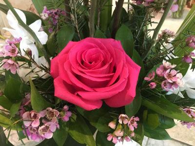 Voeux une carte Rose rose