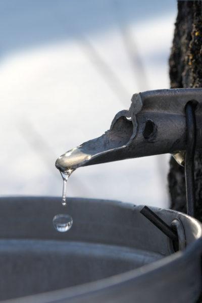 Goutte d eau d erable